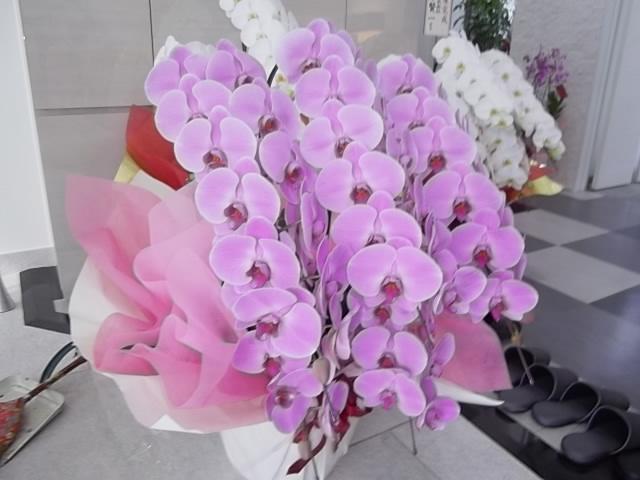 新社屋完成での5本立胡蝶蘭のピンク01